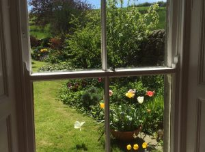 Window view of garden