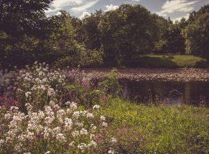 South Tyne River near Wydon Farm